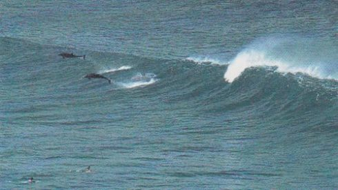 surf-sequence_still_rebecca-ross